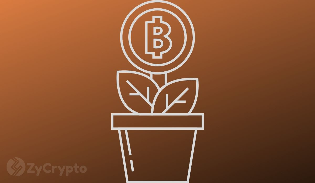 CZ Believes Bitcoin's Supply Is Running Out Amid Rapidly ...